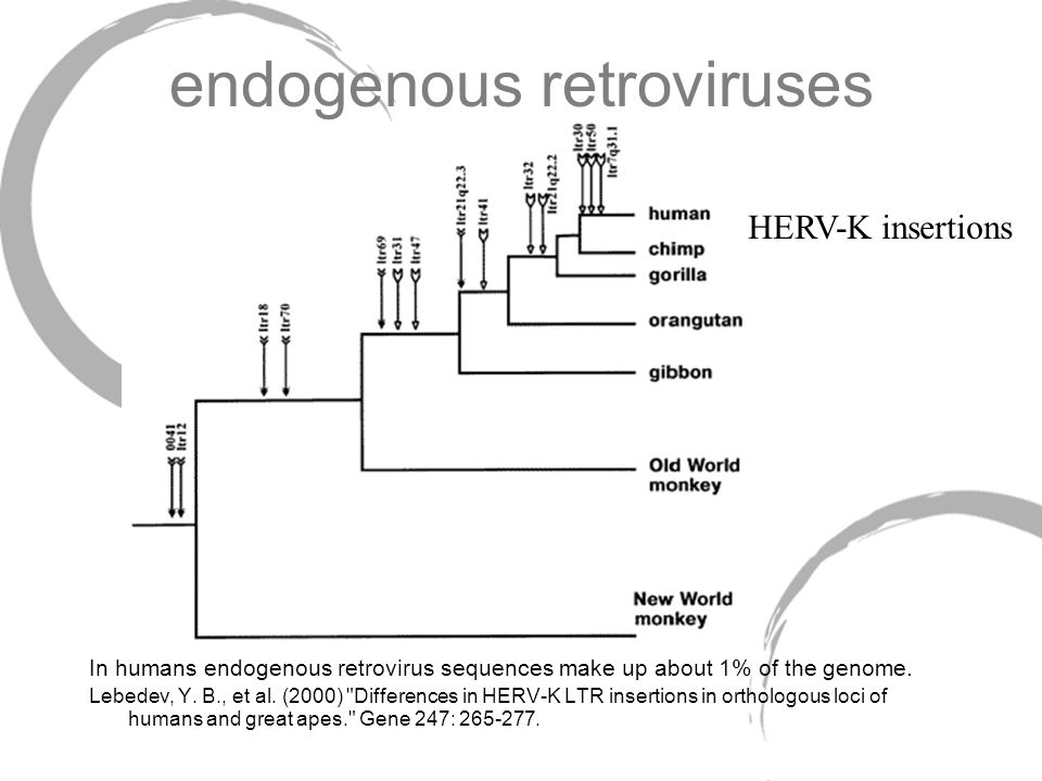 endogenous retroviruses