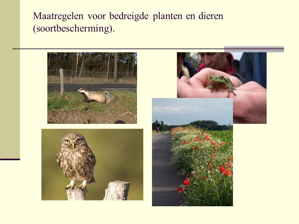 Maatregelen voor bedreigde planten en dieren (soortbescherming).