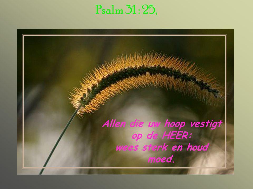 Allen die uw hoop vestigt op de HEER: