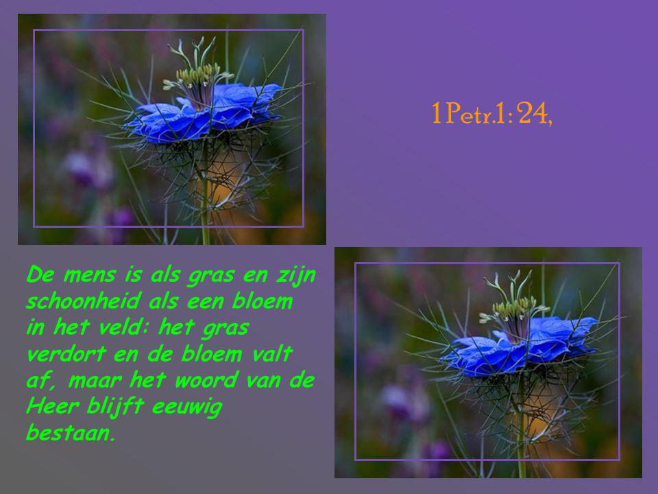 1 Petr.1 : 24,