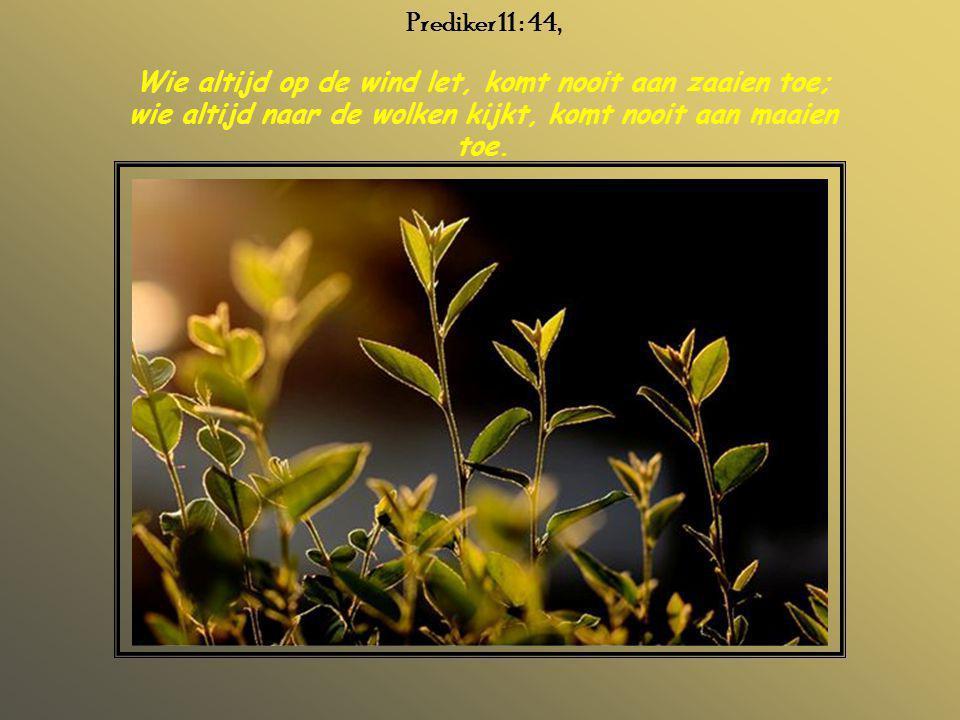 Prediker 11 : 44, Wie altijd op de wind let, komt nooit aan zaaien toe; wie altijd naar de wolken kijkt, komt nooit aan maaien toe.