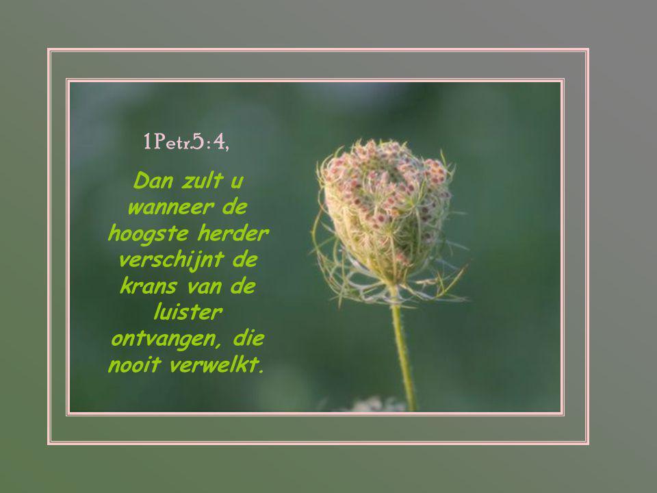1 Petr.5 : 4, Dan zult u wanneer de hoogste herder verschijnt de krans van de luister ontvangen, die nooit verwelkt.