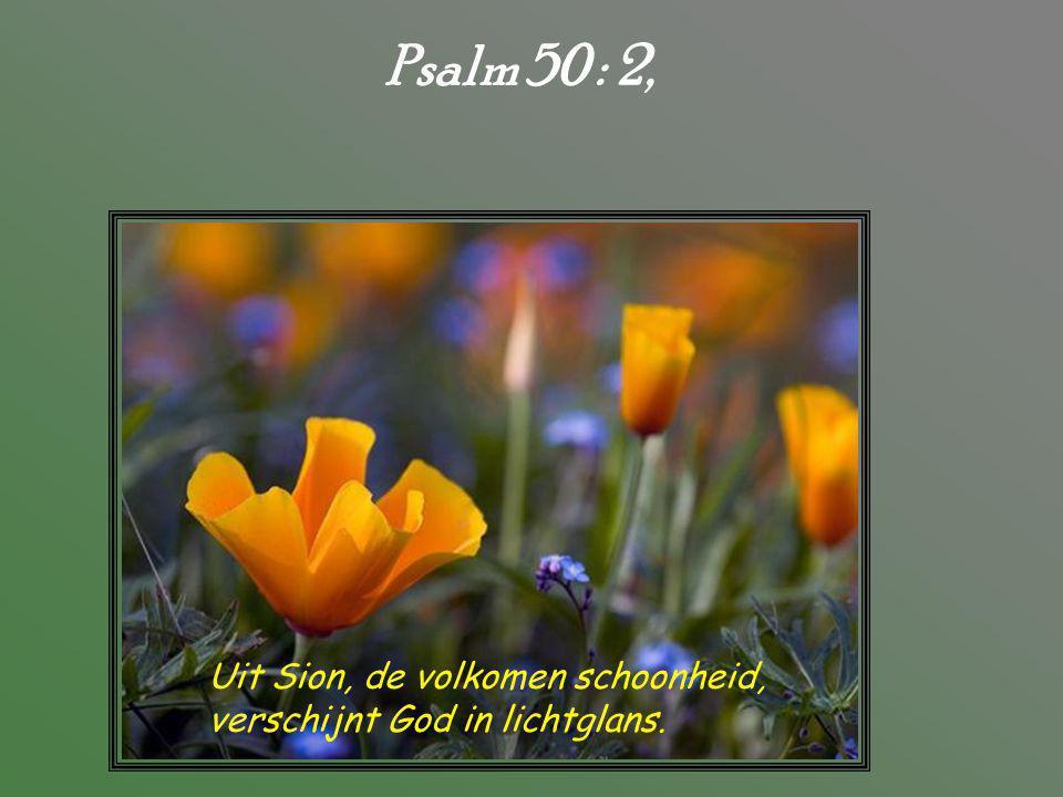 Psalm 50 : 2, Uit Sion, de volkomen schoonheid,
