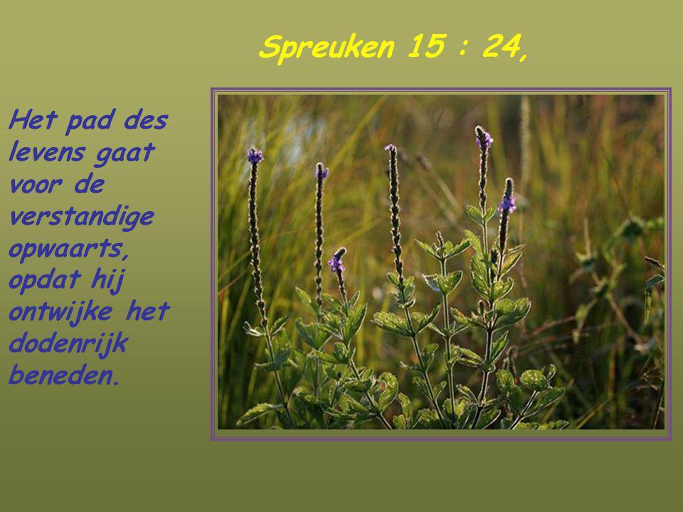 Spreuken 15 : 24, Het pad des levens gaat voor de verstandige opwaarts, opdat hij ontwijke het dodenrijk beneden.