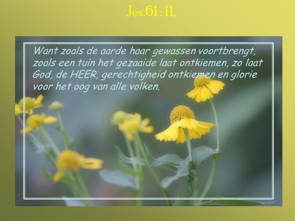 Jes.61 : 11,