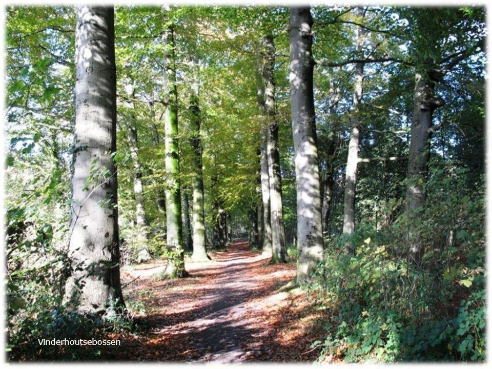 Vinderhoutsebossen