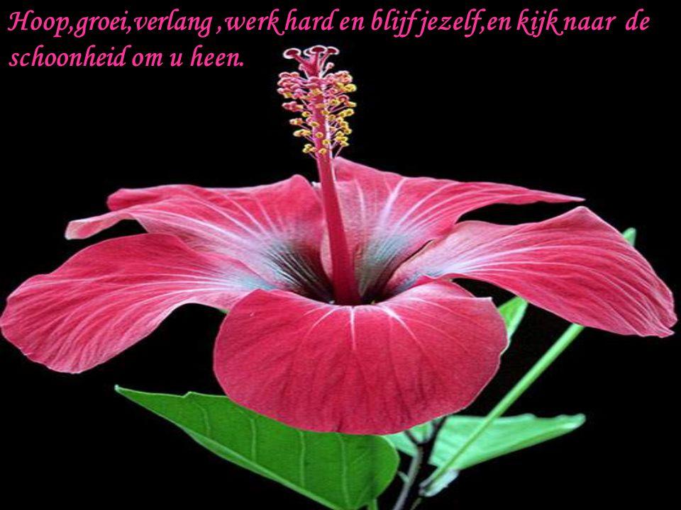 Hoop,groei,verlang ,werk hard en blijf jezelf,en kijk naar de schoonheid om u heen.