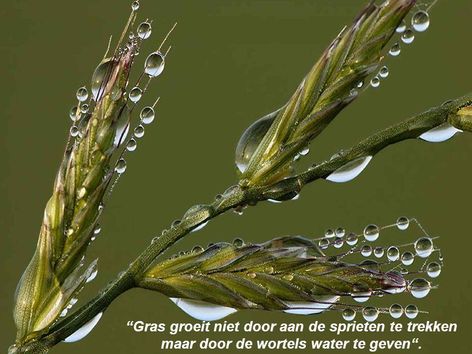 Gras groeit niet door aan de sprieten te trekken maar door de wortels water te geven .