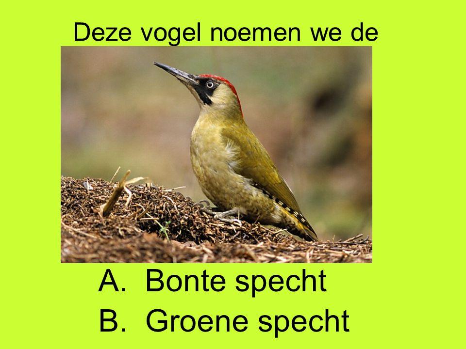 Deze vogel noemen we de A. Bonte specht B. Groene specht