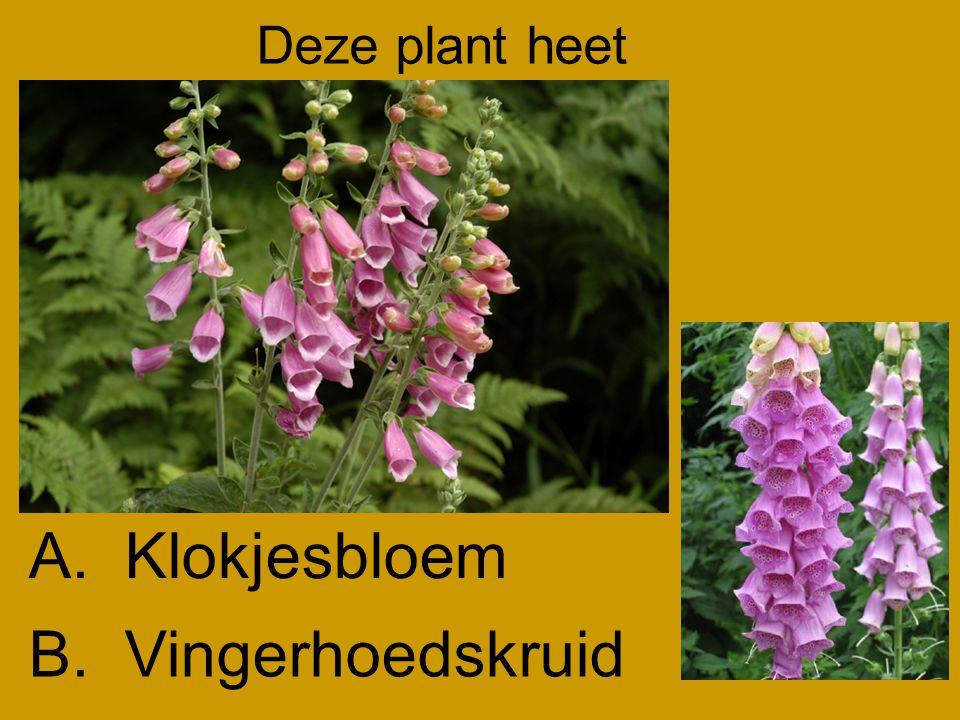 Deze plant heet A. Klokjesbloem B. Vingerhoedskruid