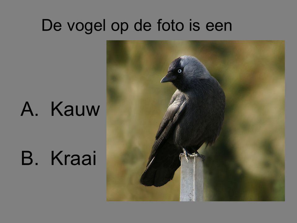 De vogel op de foto is een