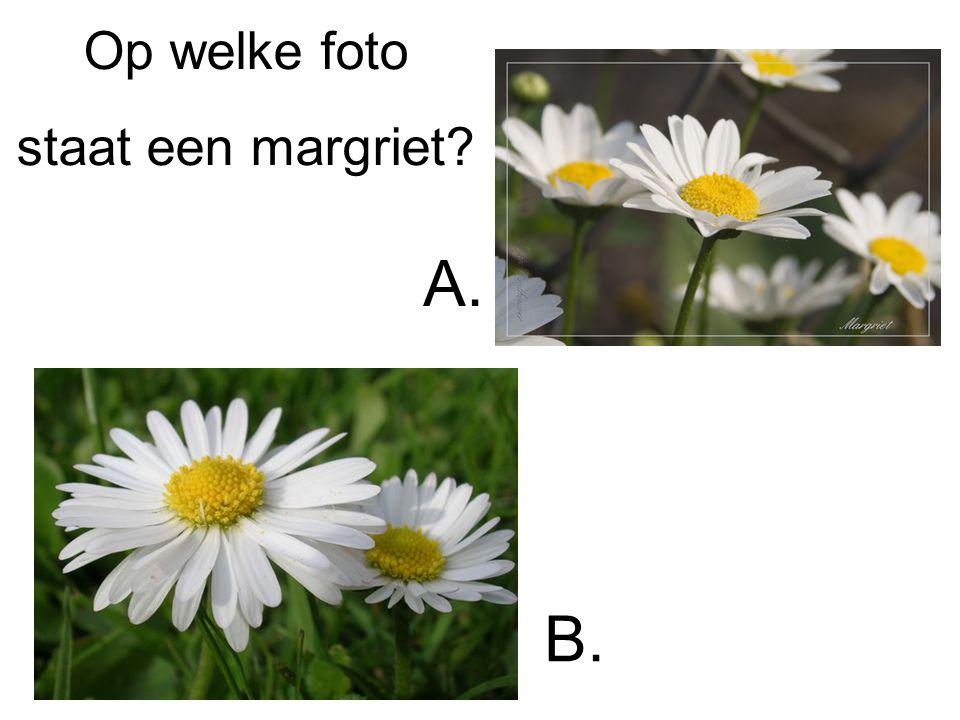 Op welke foto staat een margriet A. B.