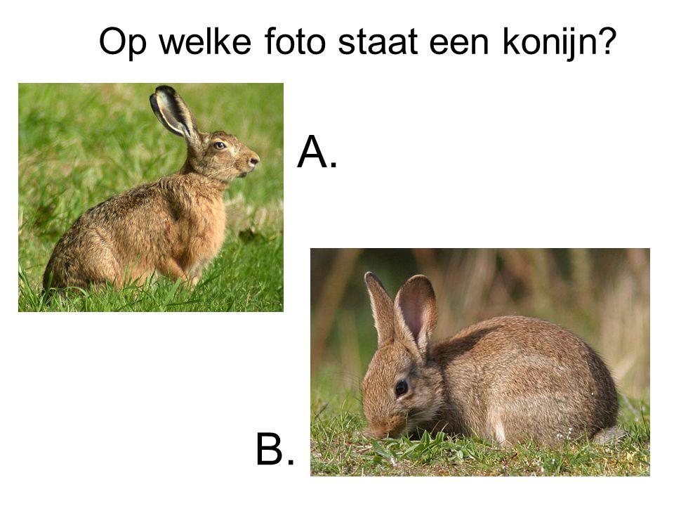 Op welke foto staat een konijn