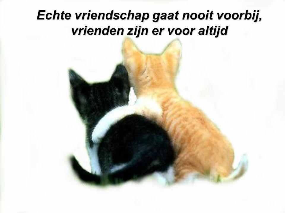 Echte vriendschap gaat nooit voorbij, vrienden zijn er voor altijd