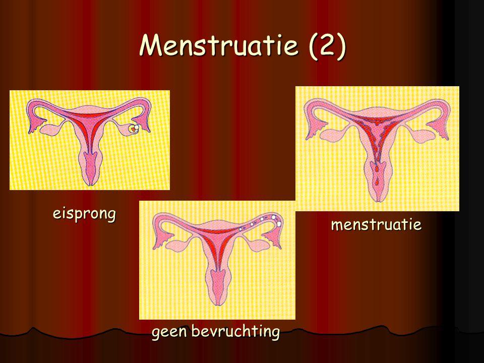 Menstruatie (2) eisprong menstruatie geen bevruchting