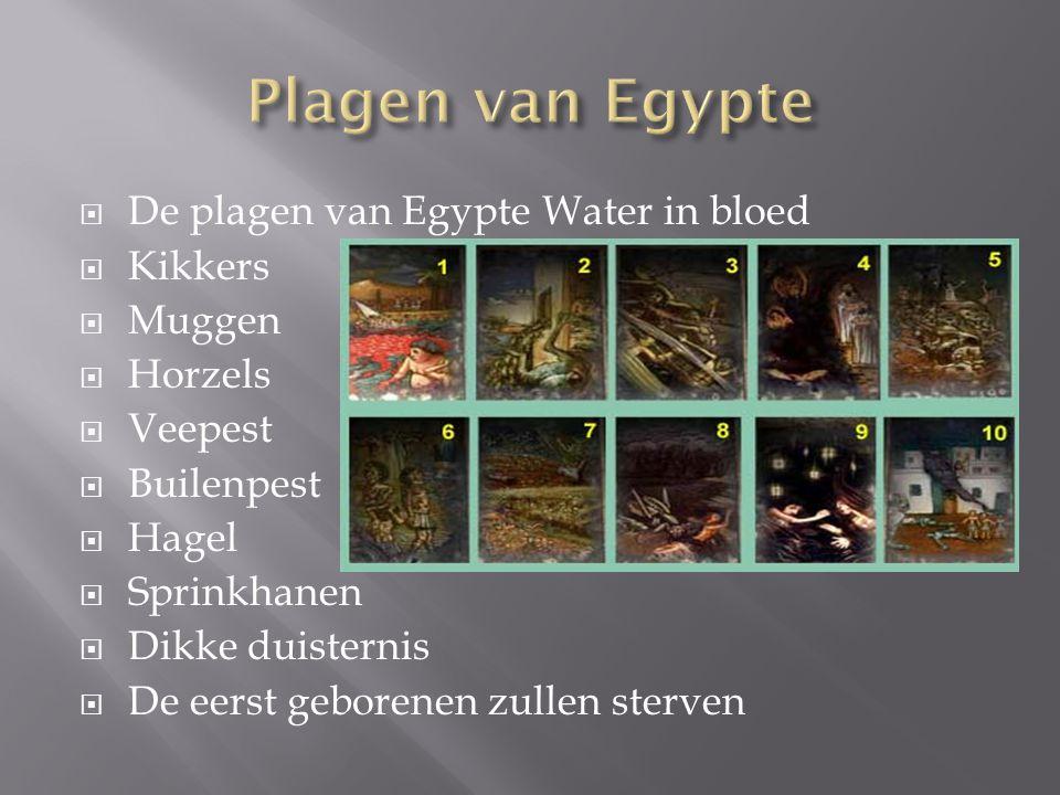 Plagen van Egypte De plagen van Egypte Water in bloed Kikkers Muggen