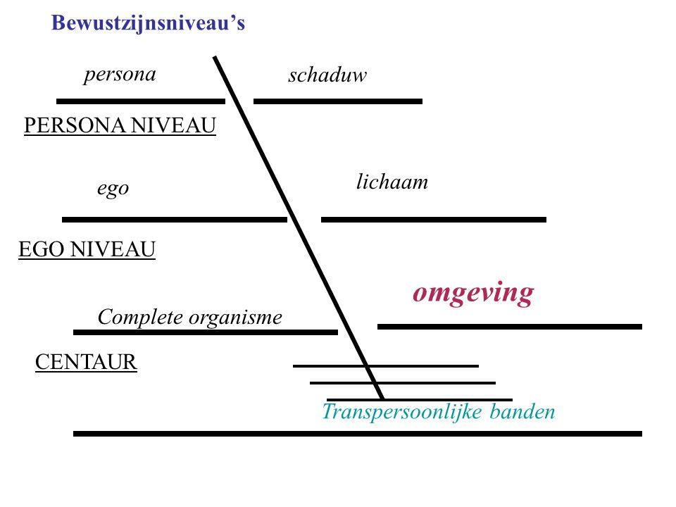 omgeving Bewustzijnsniveau's persona schaduw PERSONA NIVEAU lichaam