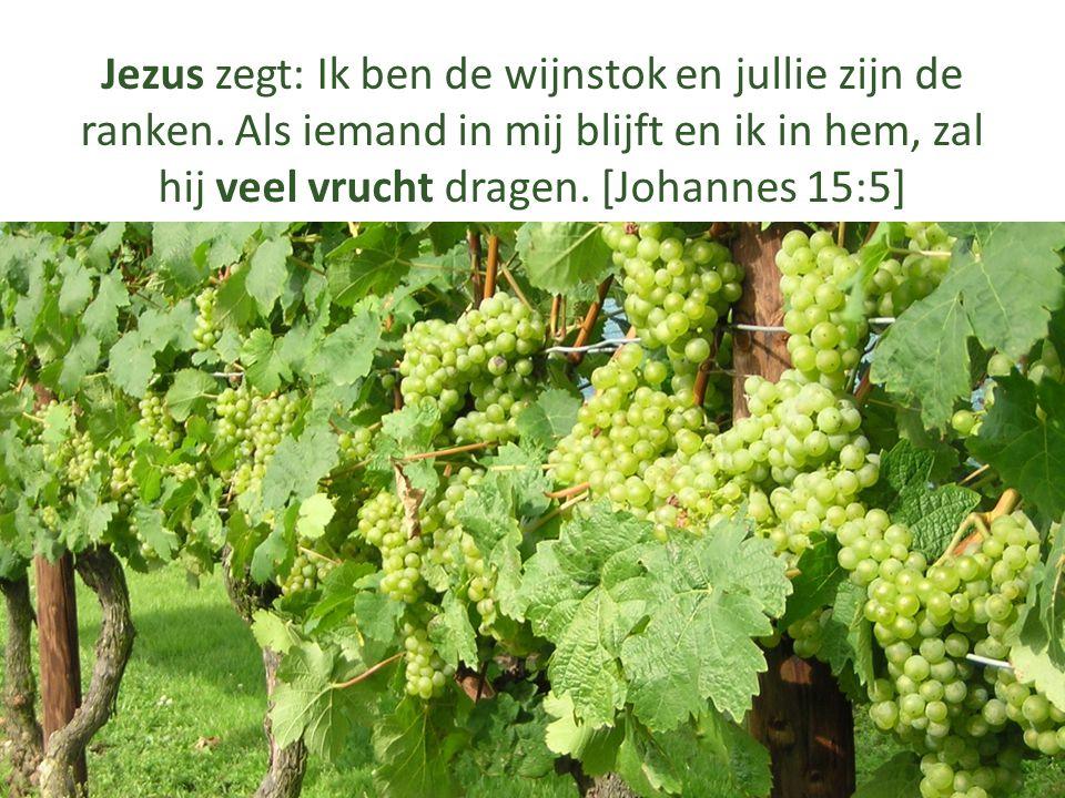 Jezus zegt: Ik ben de wijnstok en jullie zijn de ranken