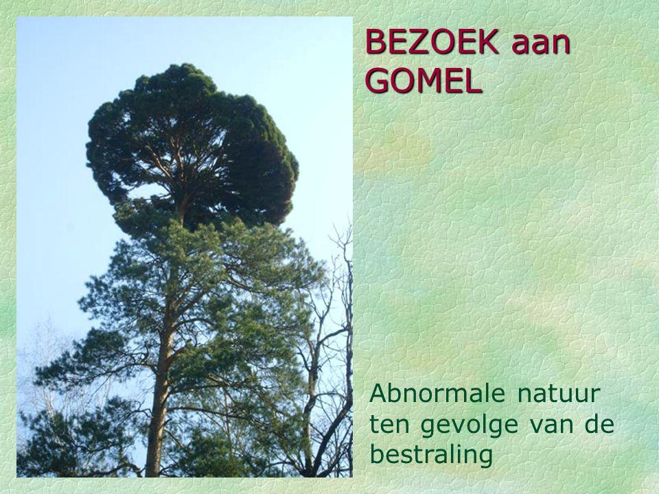 BEZOEK aan GOMEL Abnormale natuur ten gevolge van de bestraling