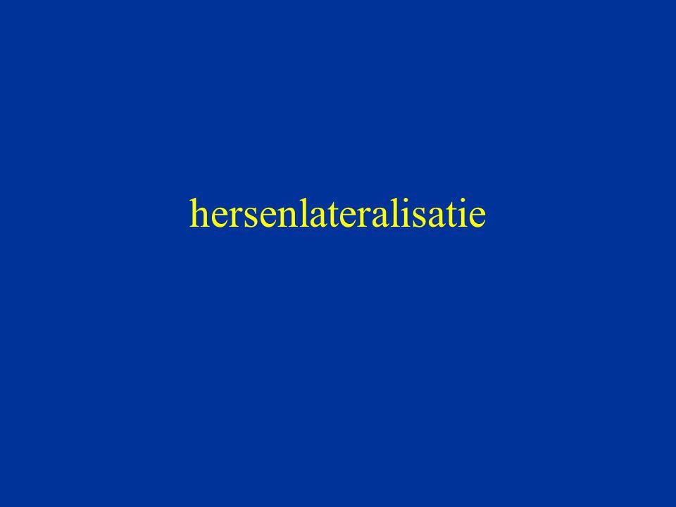 hersenlateralisatie