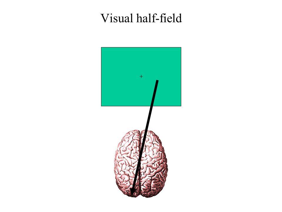 Visual half-field +