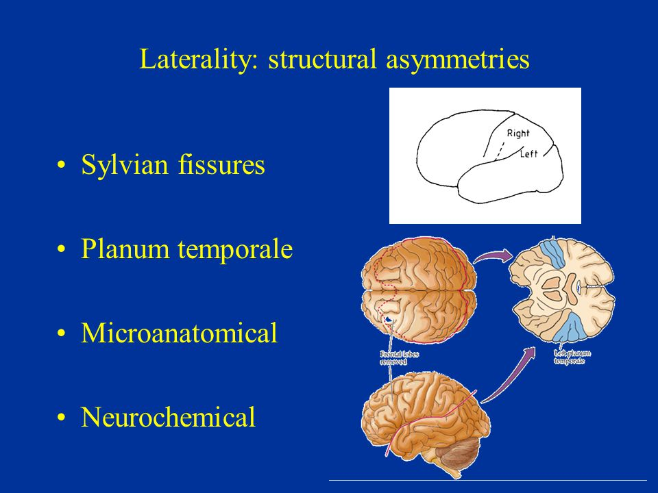 Laterality: structural asymmetries