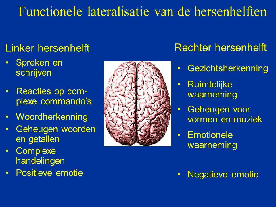 Functionele lateralisatie van de hersenhelften