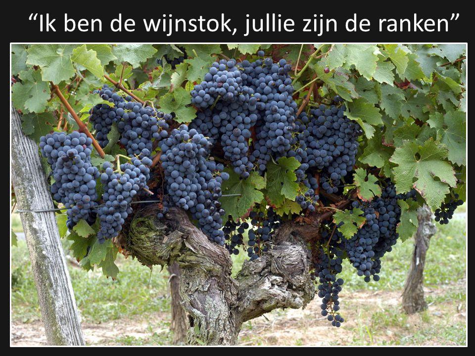 Ik ben de wijnstok, jullie zijn de ranken