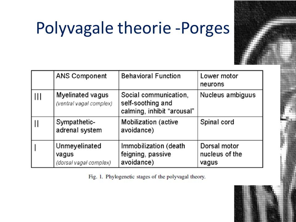 Polyvagale theorie -Porges