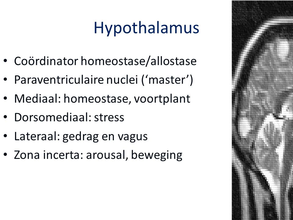Hypothalamus Coördinator homeostase/allostase