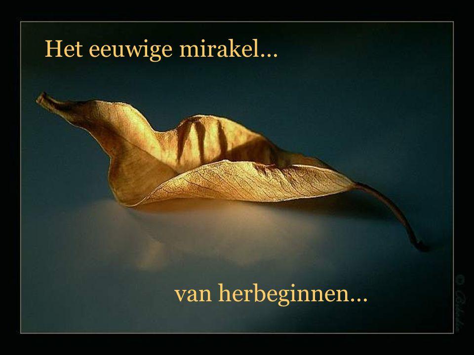 Het eeuwige mirakel… van herbeginnen…
