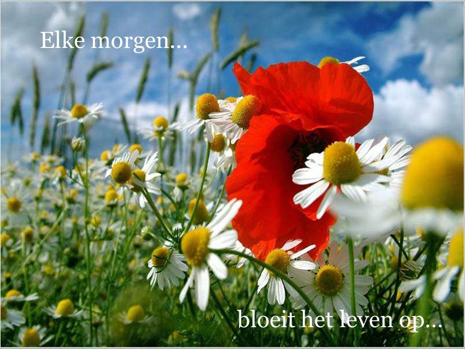 Elke morgen... bloeit het leven op…