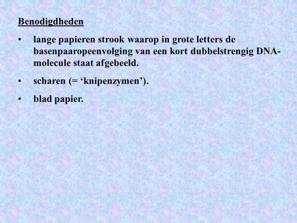 Benodigdheden lange papieren strook waarop in grote letters de basenpaaropeenvolging van een kort dubbelstrengig DNA-molecule staat afgebeeld.