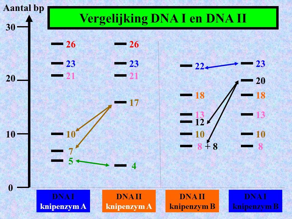 Vergelijking DNA I en DNA II