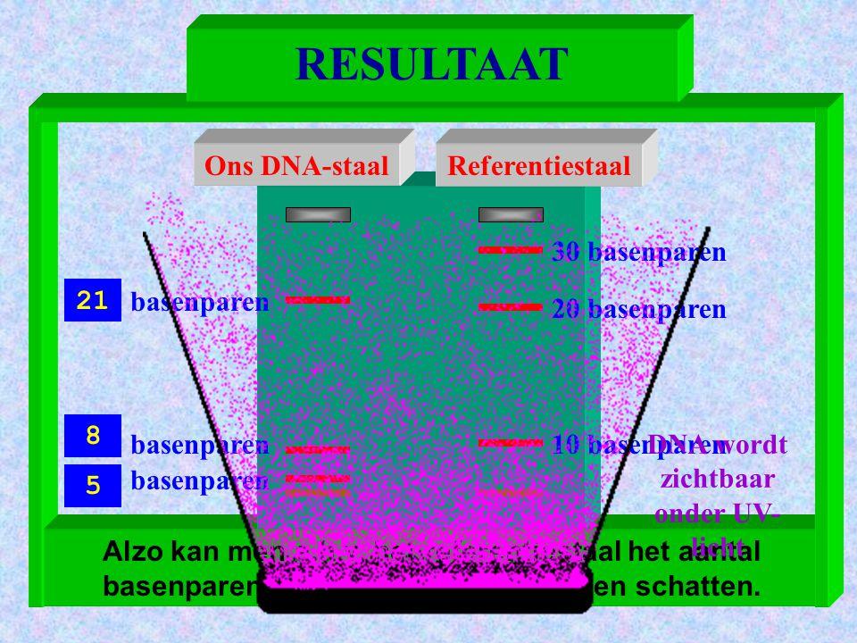 DNA wordt zichtbaar onder UV-licht