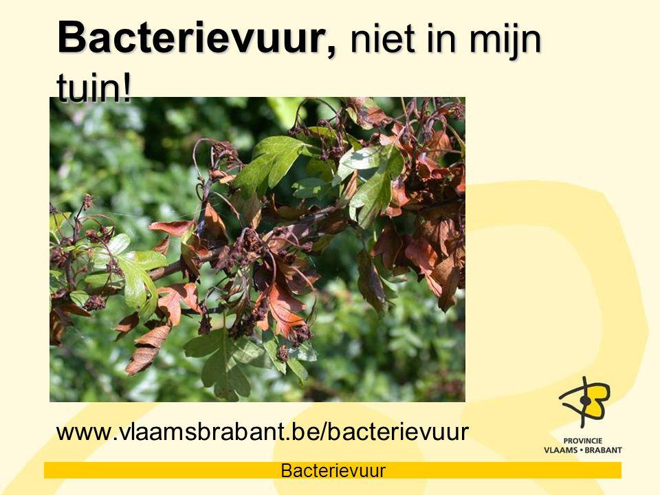 Bacterievuur, niet in mijn tuin!