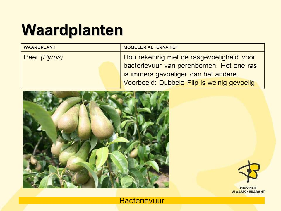 Waardplanten Peer (Pyrus)