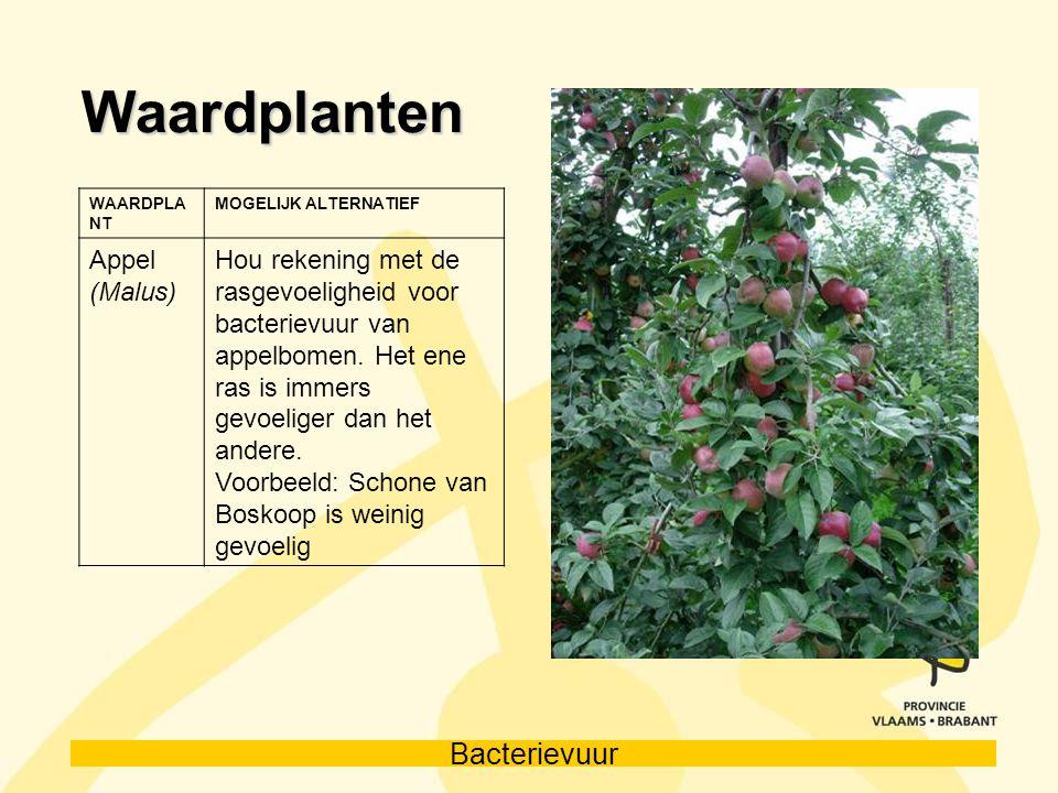 Waardplanten Appel (Malus)