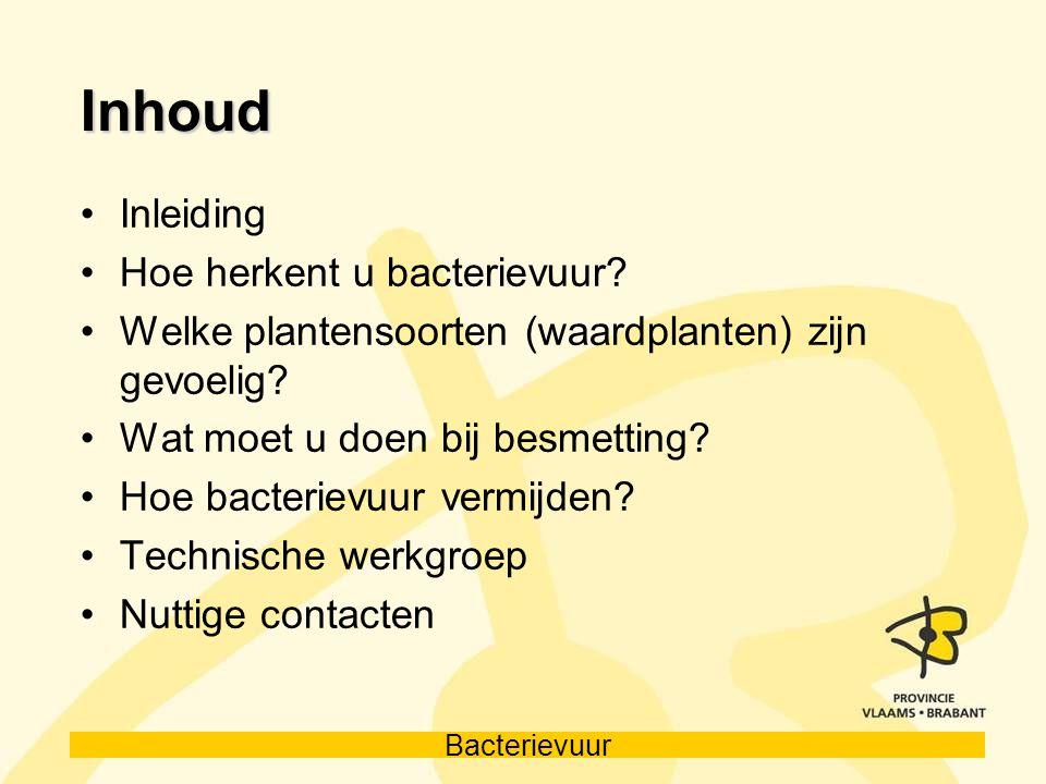 Inhoud Inleiding Hoe herkent u bacterievuur