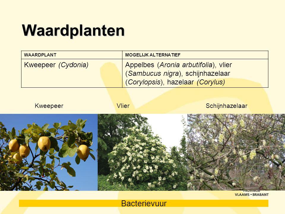Waardplanten Kweepeer (Cydonia)