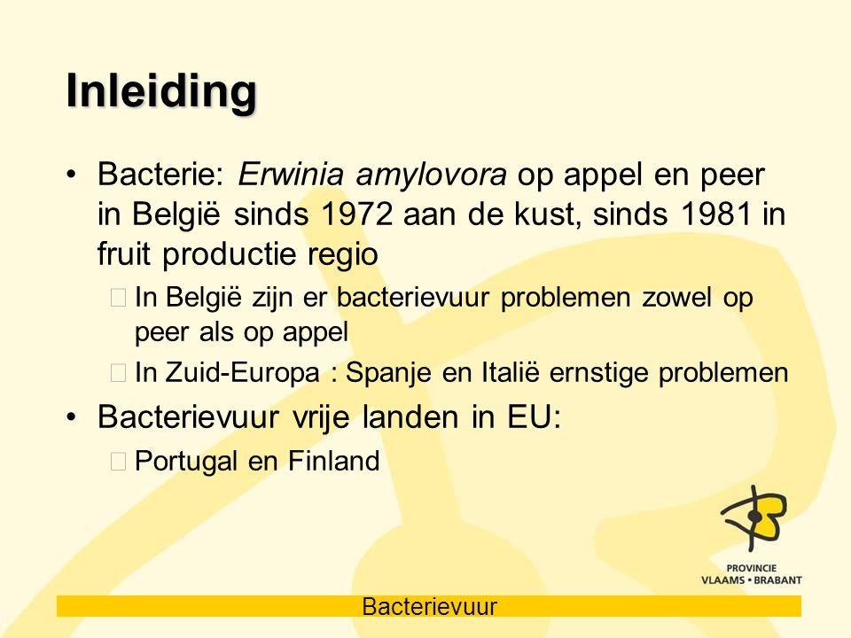 Inleiding Bacterie: Erwinia amylovora op appel en peer in België sinds 1972 aan de kust, sinds 1981 in fruit productie regio.