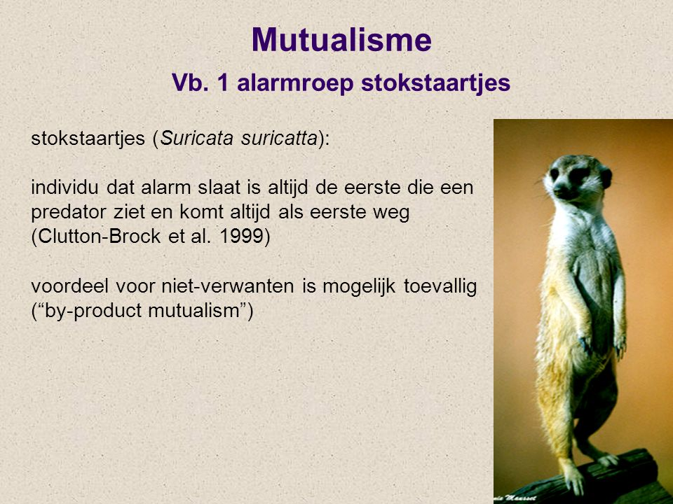 Mutualisme Vb. 1 alarmroep stokstaartjes