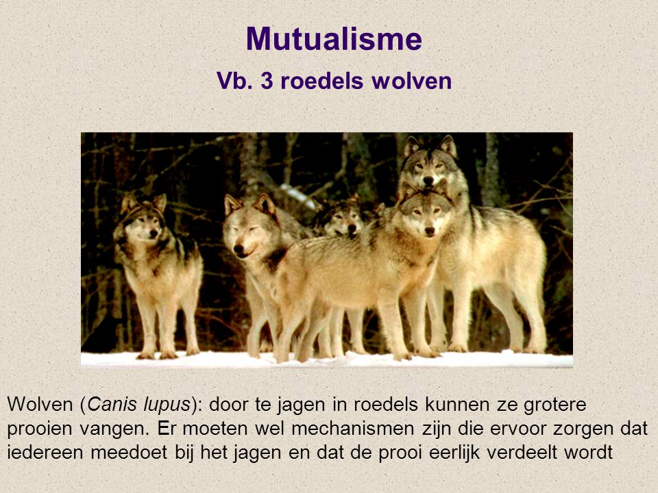 Mutualisme Vb. 3 roedels wolven