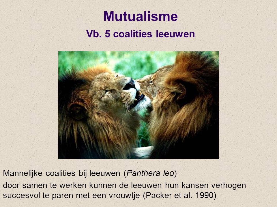Mutualisme Vb. 5 coalities leeuwen