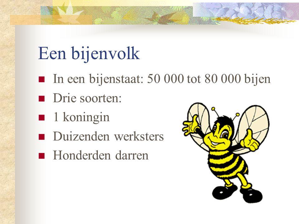Een bijenvolk In een bijenstaat: 50 000 tot 80 000 bijen Drie soorten: