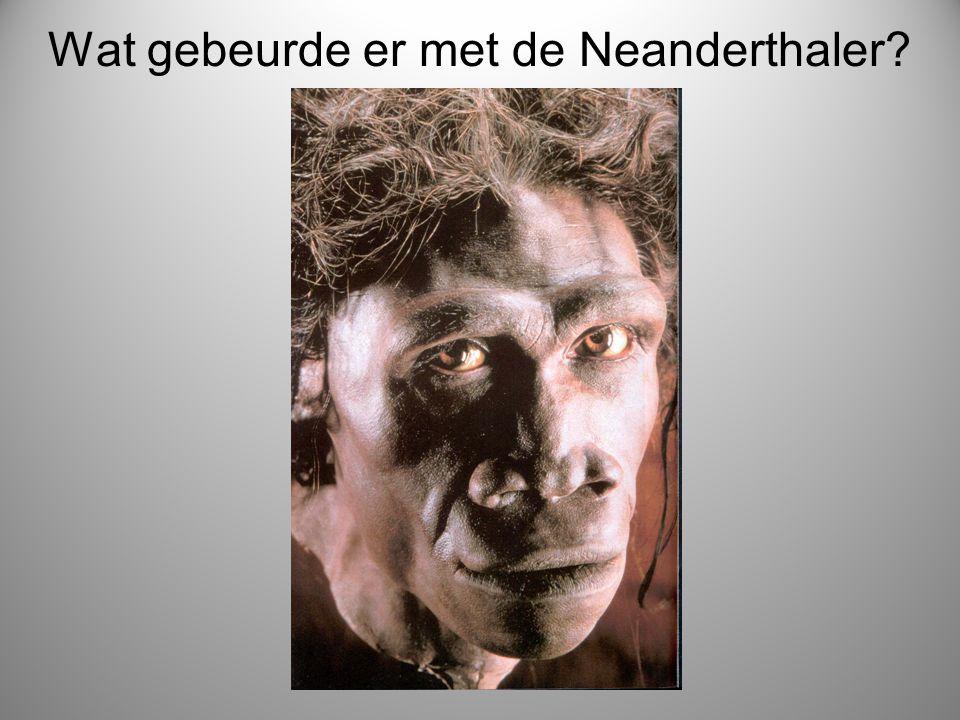 Wat gebeurde er met de Neanderthaler