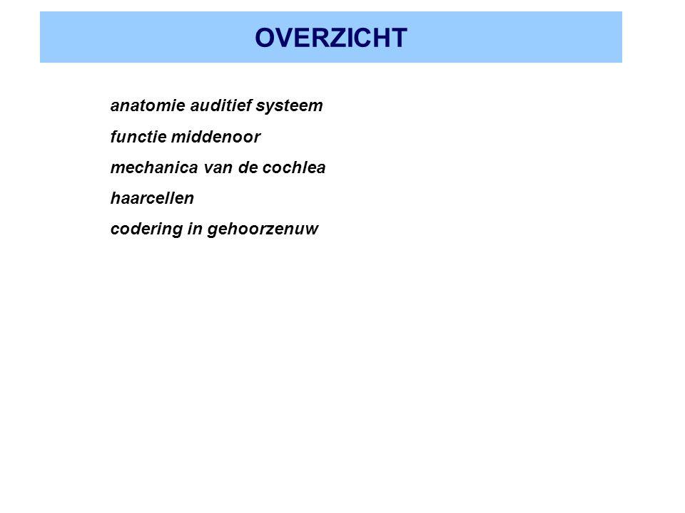 OVERZICHT anatomie auditief systeem functie middenoor