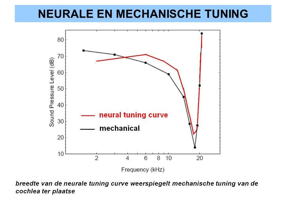 NEURALE EN MECHANISCHE TUNING