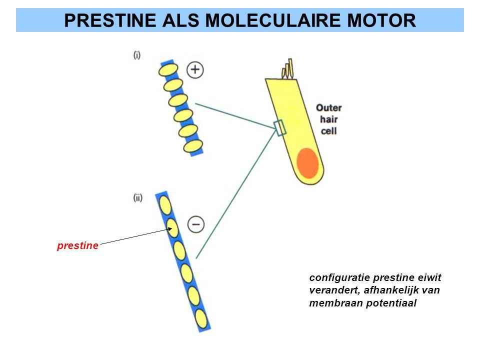 PRESTINE ALS MOLECULAIRE MOTOR