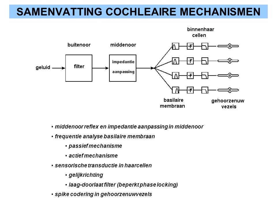 SAMENVATTING COCHLEAIRE MECHANISMEN